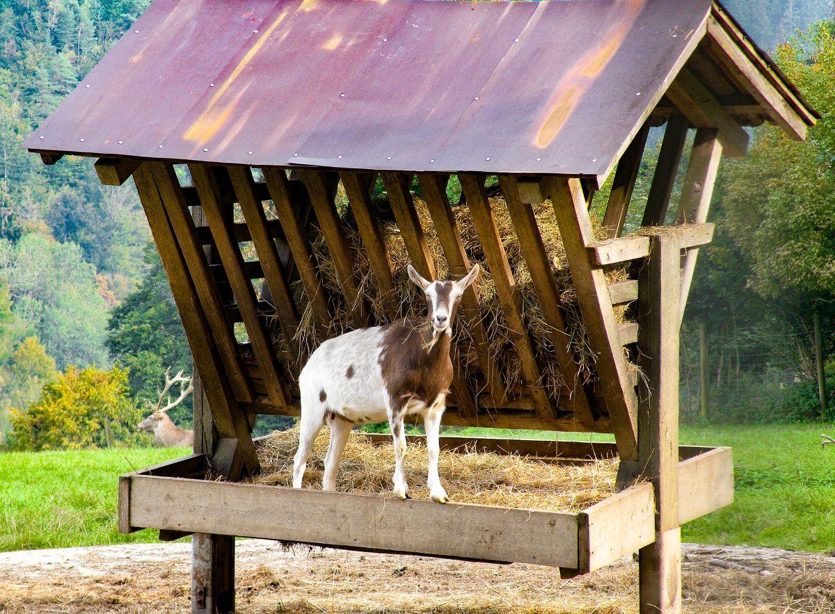 Krippe mit Dach für Tierfutter