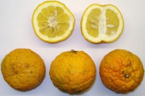 Pomeranze (Frucht)